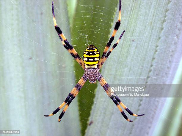 vibrant spider - radial symmetry stock pictures, royalty-free photos & images