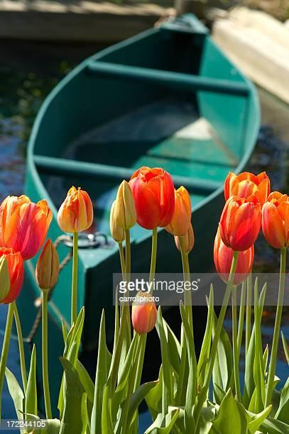 Vibrant Tulips and Canoe