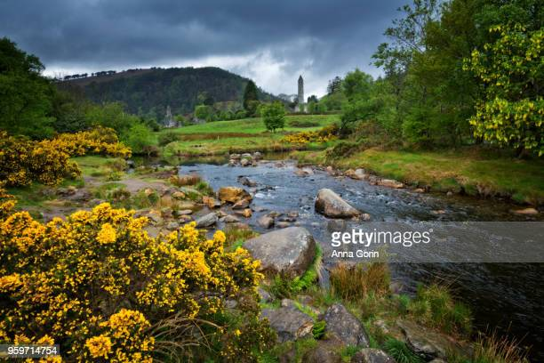 Vibrant yellow gorse lining stream flowing past Glendalough Monastic Site in Wicklow Mountains National Park under stormy skies, southeast Ireland