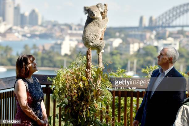 US Vice President Mike Pence and his wife Karen look at a koala during a visit to Taronga Park Zoo in Sydney on April 23 2017 Pence is visiting...