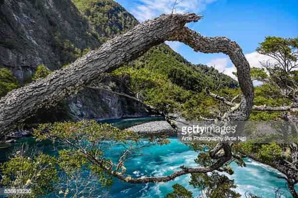 Vicente Perez Rosales National Park, Los Lagos Region, Llanquihue Province, Chile