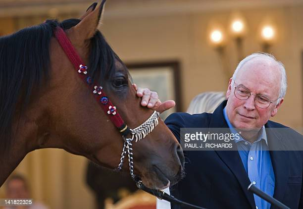 US VicePresident Dick Cheney looks at one of Saudi Arabia King Abdullah bin Abdulaziz's famous Arabian horses on March 21 2008 inside the...