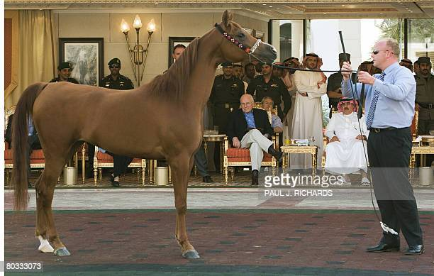 US VicePresident Dick Cheney looks at one of Saudi Arabia King Abdullah bin Abdulaziz's famous Arabian horses with Prince Miteb bin Abdulla the...