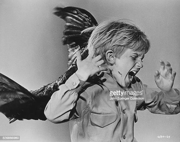 Vicious crow attacks a young boy in Alfred Hitchcock's The Birds.