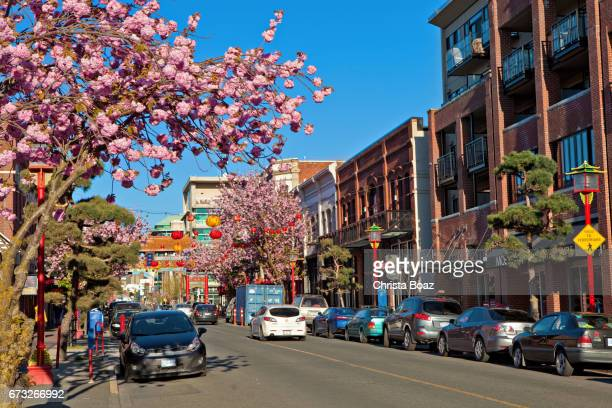 victoria chinatown - victoria canada stock pictures, royalty-free photos & images