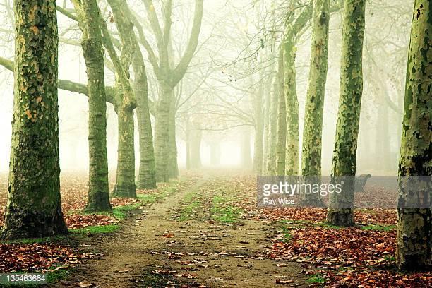 Victoria park in mist