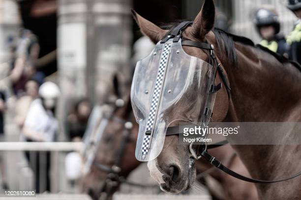 victoria police mounted branch - riot shield stock pictures, royalty-free photos & images