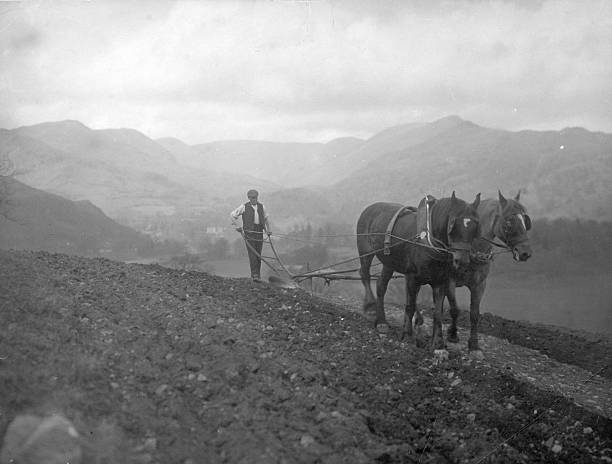 A Victorian farmer ploughing the Uplands with a horse-drawn...