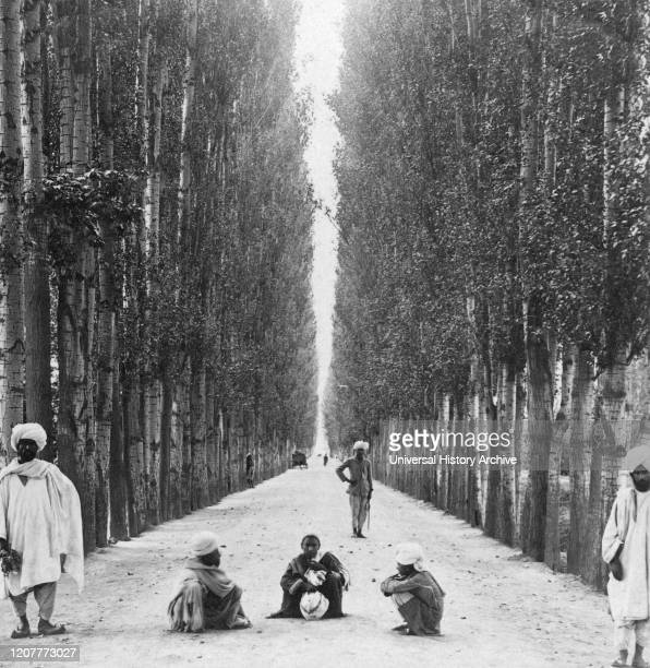 Victorian stereo view card from circa 1900, historic social image. Wayfarers on a straight 30 mile road lined with stately poplar trees, Baramula to...