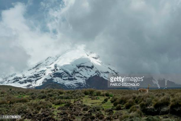 60 Top Chimborazo Pictures, Photos, & Images - Getty Images