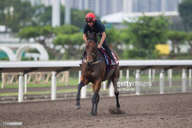 Viddora works on the dirt track at Sha Tin Racecourse on April 24 2019 in Hong Kong