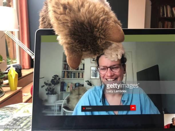 video call with cat joining in - lucy lambriex stockfoto's en -beelden