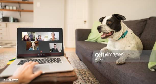la chat video semplifica il distanziamento sociale - soggettiva foto e immagini stock