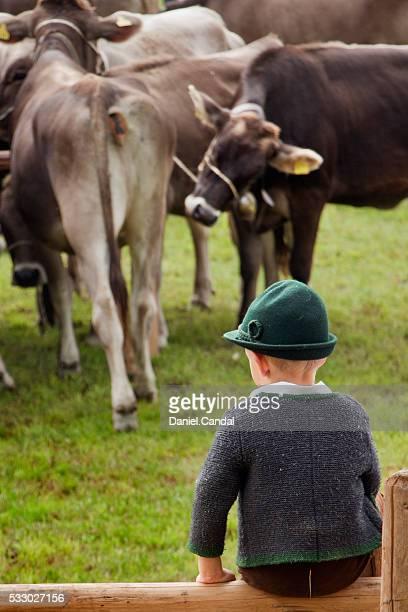 viehscheid in haldenwang, allgäu (bavaria, germany) - almabtrieb stock-fotos und bilder