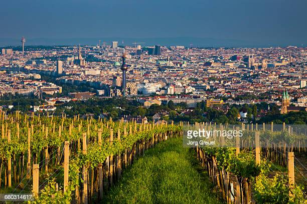 vienna at sunset - vienna austria stock pictures, royalty-free photos & images