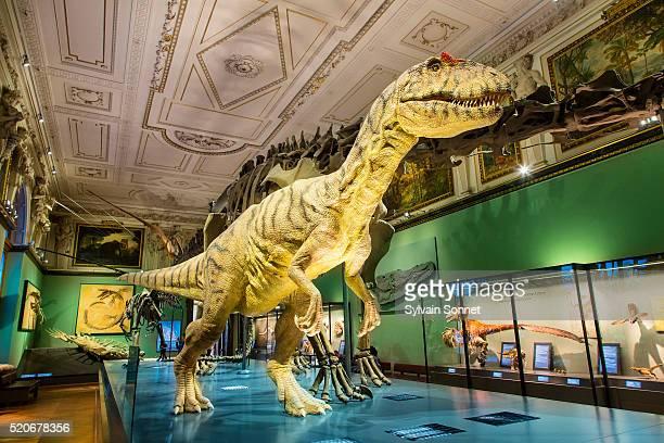 Vienna, The Naturhistorisches Museum