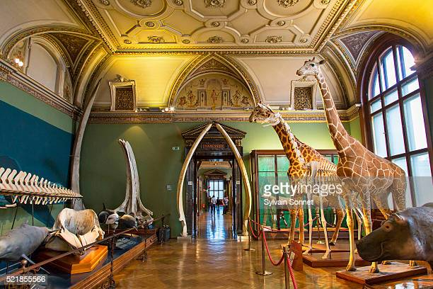vienna, the naturhistorisches museum - natural history museum stock pictures, royalty-free photos & images