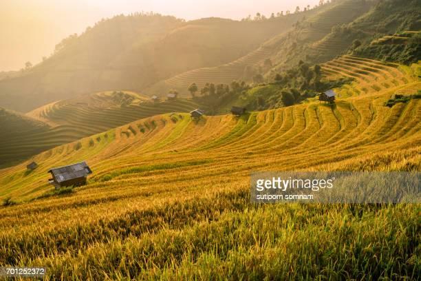 Vietnam Beautiful landscape rice field terrace