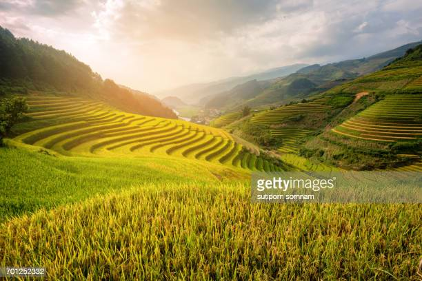Vietnam Beautiful Sunlight landscape rice field terrace