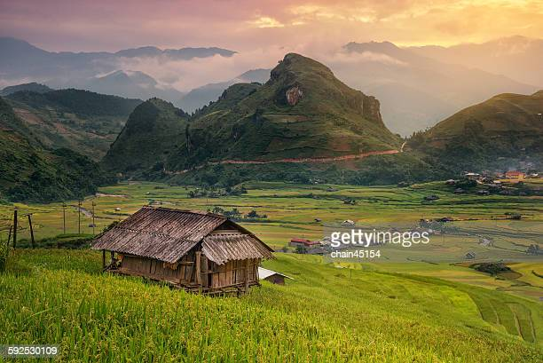 Vietnam Hut in rice field with mountain, Asia