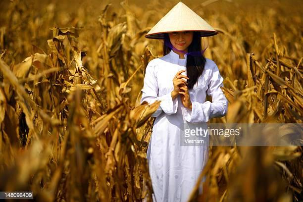 vietnam in harvest summer - chapeau chinois photos et images de collection