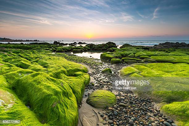 Vietnam landscape photo of Co Thach beach in morning