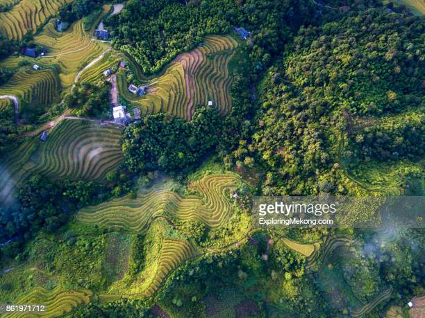 vietnam landscape - terrassenfeld stock-fotos und bilder