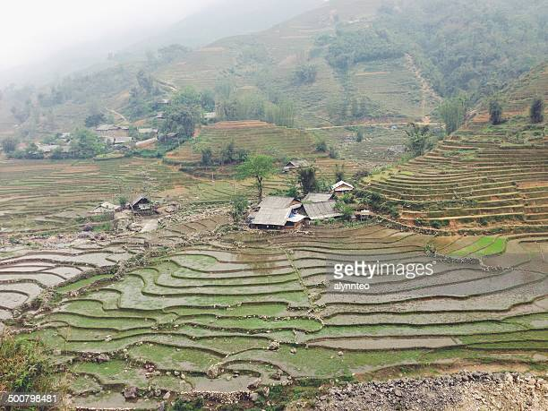 vietnam, lao cai province, sa pa, landscape of typical vietnamese agriculture - sa pa stock photos and pictures