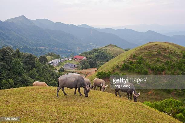 Vietnam mountainous landscape.