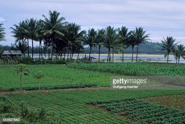 Vietnam Near My Lai Village Fields