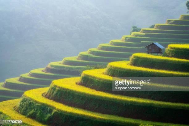 vietnam rice terrace field at mu cang chai yen bai - mù cang chải stock pictures, royalty-free photos & images