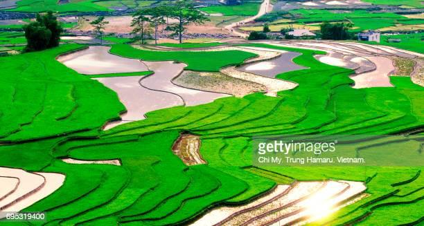 Vietnam terraces