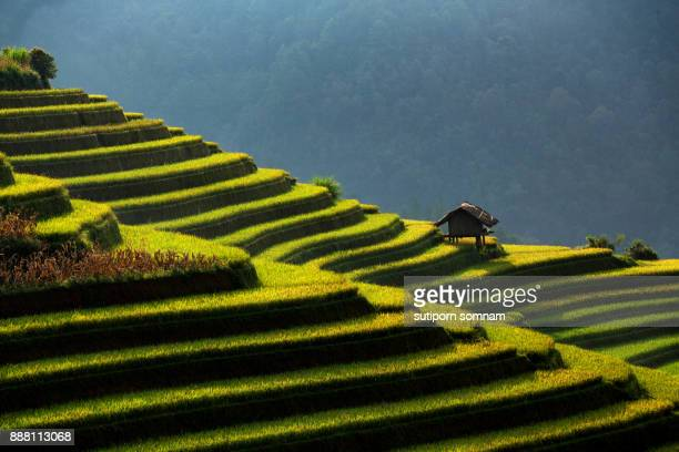 vietnam the beautiful landscape rice field terrace on the mountain curve - hanoi stock pictures, royalty-free photos & images