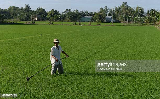 Vietnam-agriculture-environment-rice,FOCUS by Cat Barton In this picture taken on December 11 farmer Nguyen Hien Thien works on his rice field in the...