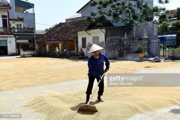 A Vietnamese farmer dries rice grains along a street in Hanoi on June 4 2020