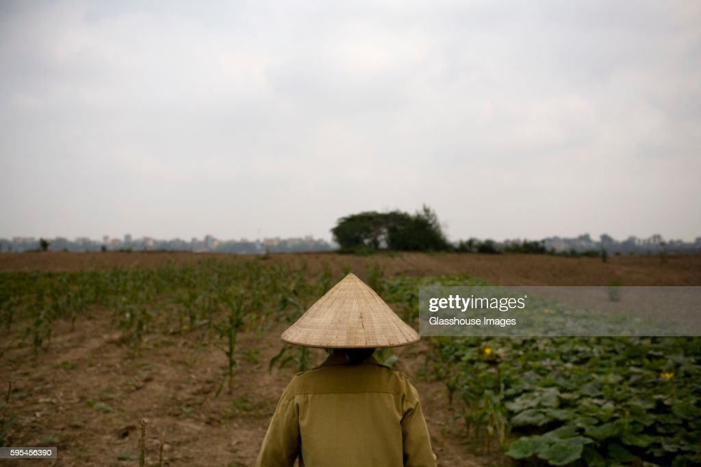 fabe298a763 Vietnamese Farmer In Conical Straw Hat Rear View Hanoi Vietnam Stock ...