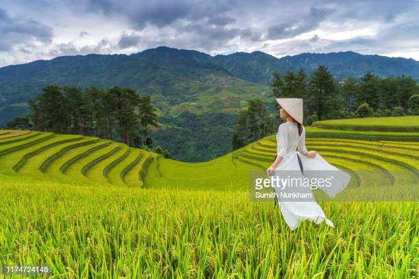 vietnamese girl with vietnam culture traditional ao dai dress in rice fields terraced of harvest season at mu cang chai, yenbai, northern vietnam. - muş city turkey stock pictures, royalty-free photos & images