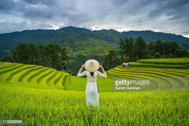 vietnamese girl with vietnam culture traditional ao dai dress in rice fields terraced of harvest season at mu cang chai, yenbai, northern vietnam. - mù cang chải stock pictures, royalty-free photos & images