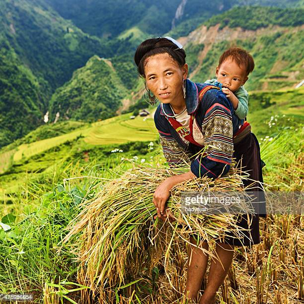 Vietnamese mother harvesting rice with her baby on back
