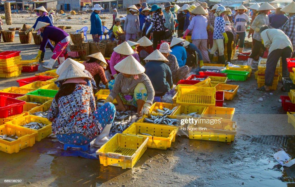 Vietnamese Non La at fishing village Long Hai, Vietnam : Stock Photo