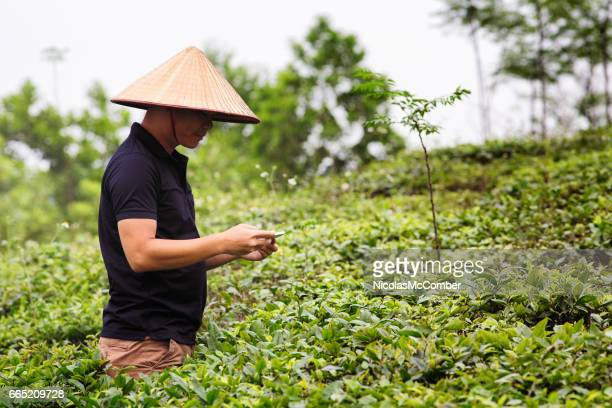 Vietnamese quality inspector taking pictures of plants with mobile phone