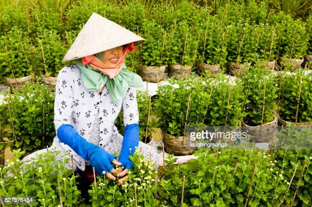 vietnamese woman agricultural occupation vietnam - can tho province stock pictures, royalty-free photos & images