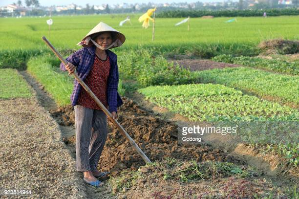 Vietnamese woman digging soil with the hoe in the vegetable field Hoi An Vietnam