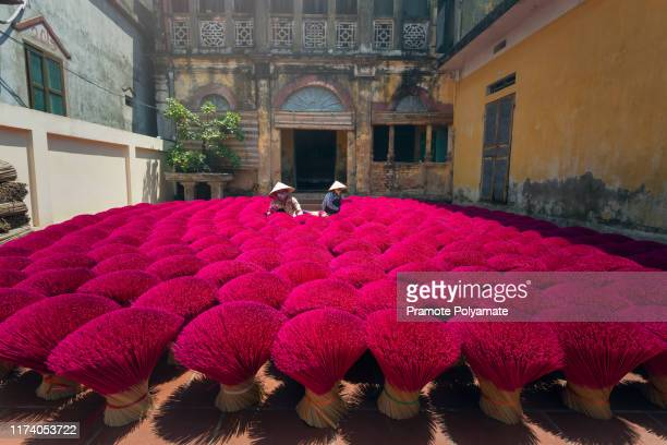 vietnam's incense village prepares for new year celebrations, incense sticks drying outdoor with vietnamese woman wearing conical hat in hanoi, vietnam - tradition stock pictures, royalty-free photos & images