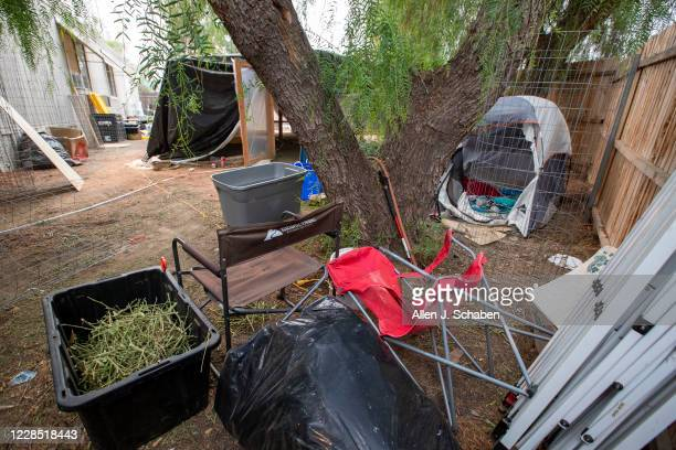 A view a bin of marijuana stems tent makeshift grow shelter tent and debris at the property where seven people were shot to death over Labor Day...