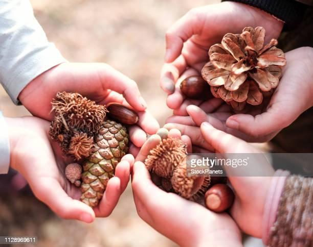 Découvre plus haut de la main d'enfants tenant des fruits de la forêt