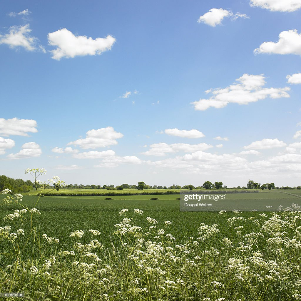 View across countryside landscape. : ストックフォト