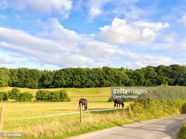 view across fields - イギリス バークシャー ストックフォトと画像