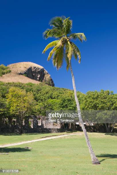 View across parkland to Signal Peak, coconut palm in foreground, Pigeon Island National Landmark, Gros Islet, St Lucia