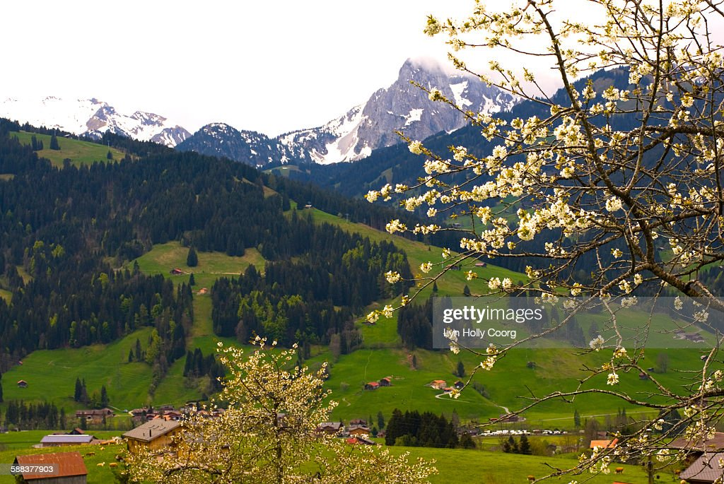 View across Swiss Valley with meadow and mountains : Stock Photo
